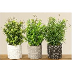 Petit plantes en pots céramique