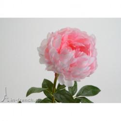 Pivoine Bakeri Rose