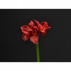 Amaryllis rouge 70 cm artificiel