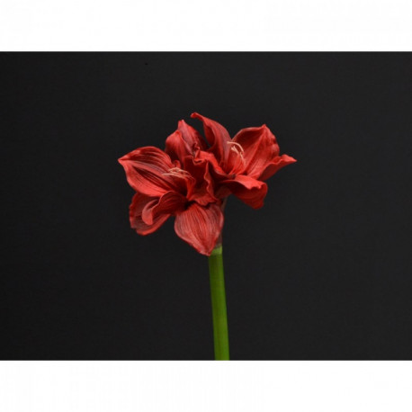 Amaryllis rouge 70 cm artificiel