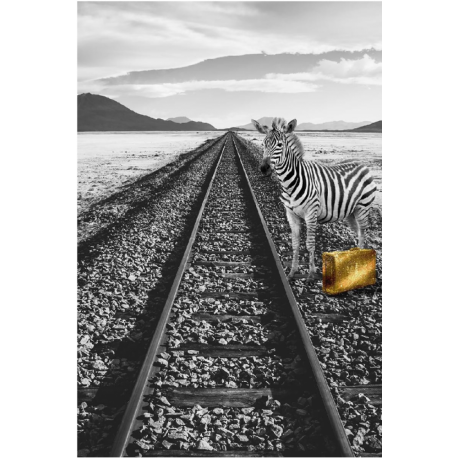 "Photo sur plexiglas ""Zèbre en voyage ""60 x 90 cm"